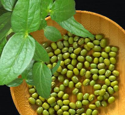 10 Manfaat Kacang Hijau untuk Ibu Hamil